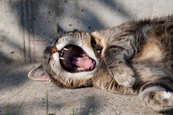 Cat lying on the ground and yawning