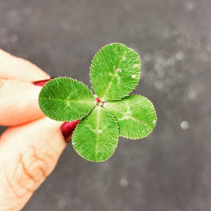 Picture of a four leaf clover depicting luck