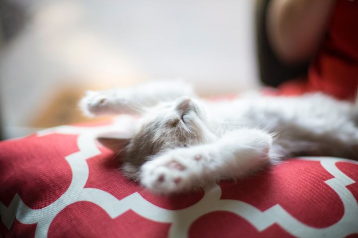 Kitten lying on back sleeping with paws in the air