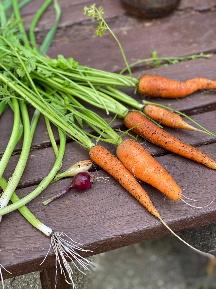 Le Coup des Carrotes (Carrots Part Two)